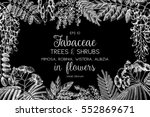 vintage trees and shrubs in... | Shutterstock .eps vector #552869671