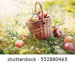 organic apples in a basket...   Shutterstock . vector #552880465