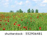 Poppies Flower Meadow Spring...