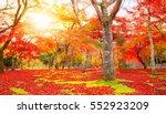 autumn season park. red leaves... | Shutterstock . vector #552923209
