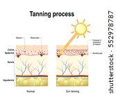 tanning process. when... | Shutterstock .eps vector #552978787