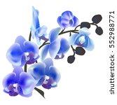 flower orchid isolated on white ...   Shutterstock .eps vector #552988771