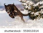 Running Dog On Snow  Black Dog...