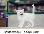 Stock photo screaming meowing annoyed white funny kitten 553016884