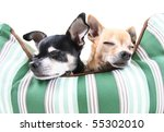 two dogs taking a nap in a pet bed - stock photo