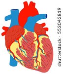 human heart muscle gross... | Shutterstock .eps vector #553042819