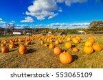 A Pumpkin Field Showing Many...