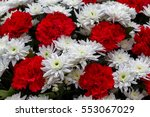 holiday basket of red and white ... | Shutterstock . vector #553067029