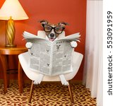 jack russell dog reading... | Shutterstock . vector #553091959