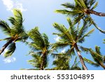 palm trees in hawaii. | Shutterstock . vector #553104895