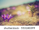 beautiful first spring flowers. ... | Shutterstock . vector #553180399