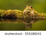 Amazonian  Amazon  Milk Frog...