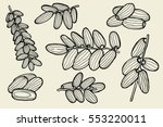 dried fruits vector