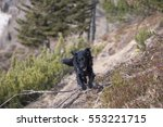 Black Dog Jumping Over Obstacl...