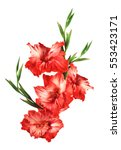 Beautiful Red Gladiolus...