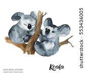 australian animals watercolor... | Shutterstock . vector #553436005
