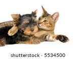 Stock photo the puppy and kitten 5534500