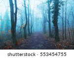 magical foggy seasonal forest... | Shutterstock . vector #553454755