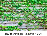 abstract green leaves of vine... | Shutterstock . vector #553484869