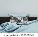 Stock photo cute dog sleeping and afraid of something 553503865