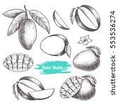 vector mango hand drawn sketch .... | Shutterstock .eps vector #553536274