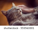 furry tabby cat lying on its... | Shutterstock . vector #553563301