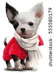 Stock photo chihuahua watercolor painting 553580179