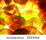 colorful autumn leaves   Shutterstock . vector #5535964