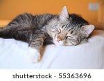 Stock photo cat sleeping peacefully 55363696
