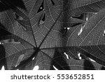 papaya leaf monochrome. | Shutterstock . vector #553652851