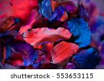 abstraction from the leaves ... | Shutterstock . vector #553653115