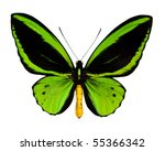 Stock photo a green butterfly isolated on white 55366342
