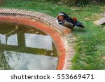 Mandarin Duck Relax Beside A...