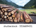 Wooden logs of pine woods in...