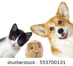 puppy and kitten and guinea pig  | Shutterstock . vector #553700131