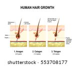 hair growth. anagen is the... | Shutterstock .eps vector #553708177