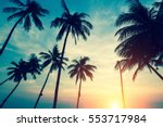 silhouettes of palm trees... | Shutterstock . vector #553717984