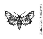 hemaris fuciformis. sphingidae. ... | Shutterstock . vector #553743955