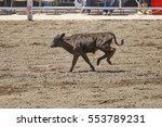 Calf Lasso
