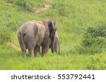 thai elephant in nature  ... | Shutterstock . vector #553792441