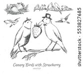 Hand Drawn Birds Canary With...
