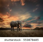 elephant with trunks and big... | Shutterstock . vector #553878685