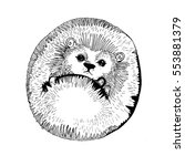 hedgehog | Shutterstock . vector #553881379