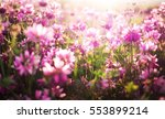 flower background with pink... | Shutterstock . vector #553899214