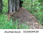 The Anthill In The Forest