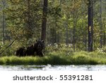 European brown bear resting in the shade by lake surrounded by cloud of flies, forest of CE Finland, Scandinavia, Northern Europe - stock photo