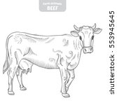cow in a graphic style  hand... | Shutterstock .eps vector #553945645