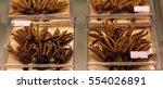 cordyceps  ophiocordyceps...   Shutterstock . vector #554026891