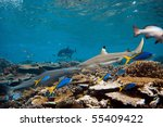 Pacific ocean. Blacktip and Whitetip sharks over coral reef. - stock photo