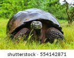 Stock photo galapagos giant tortoise geochelone elephantopus on santa cruz island in galapagos national park 554142871